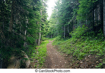 Evergreen Forest Path
