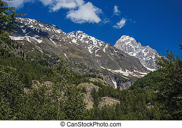 Evergreen forest with snowy mountains and blue sky in Argentiere.