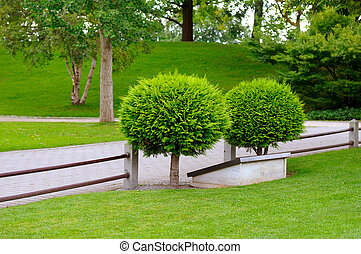 evergreen, lato, boxtree, park