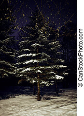 pine tree in night winter forest