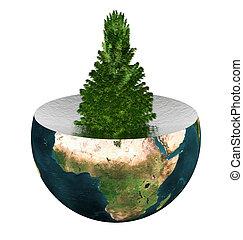 evergreen spruce on earth hemisphere isolated on white