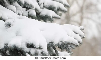 Evergreen tree and a snowstorm in the winter forest
