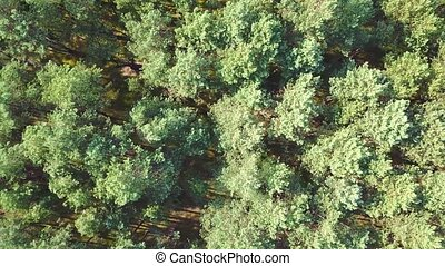 Evergreen tree tops from above - From above shot taken with...