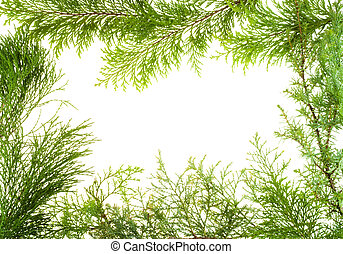 Evergreen various plants branches frame