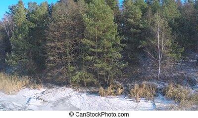 evergreen winter forest