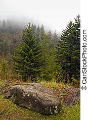 Evergreens, Autumn, Great Smoky Mountains