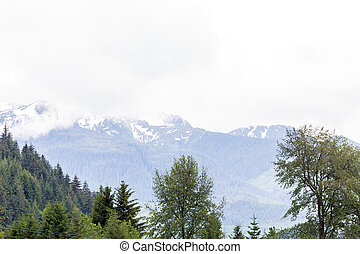 Evergreens with Snowy Mountain in Background