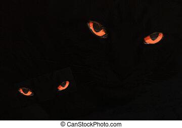 Evil Cat Eyes on Black