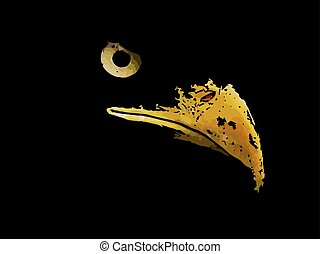 Evil predator is the eagle an American symbol.