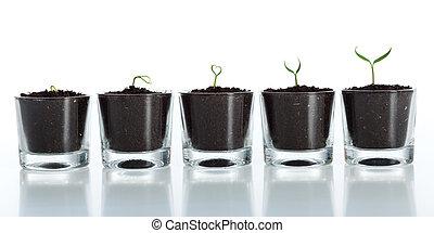 evolução, crescimento, -, planta, jovem