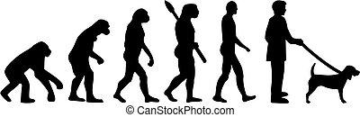 evolución, sabueso, perro