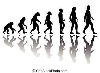 evolutie, silhouette, man