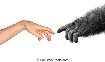 Evolution and origins concept based on Michelangelo s...