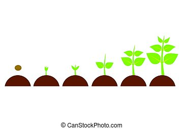 evolution young plant - plants growing in the pot from small...