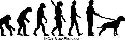 evolutionsphasen, boxer hund
