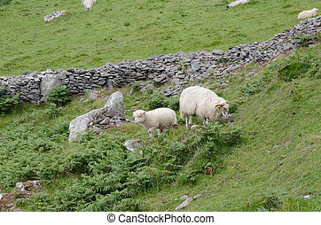 Ewe and Lamb by Rock Wall