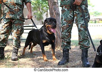 exército, cão
