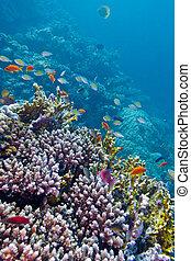 exótico, arrecife, colorido, fondo, coral, tropical, mar, peces