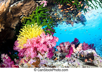 exótico, barrera coralina