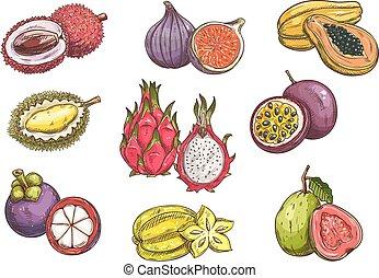 exótico, frutas tropicales, dibujado, mano