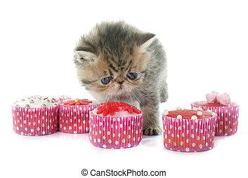 exótico, gatito, cupcakes, shorthair
