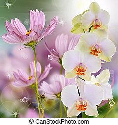 exótico, hermoso, flor