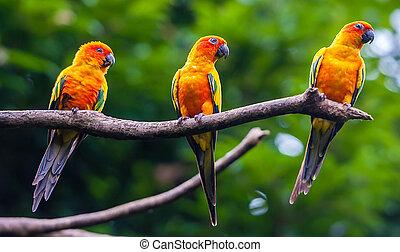 exótico, loros, sentarse, en un rama, fauna