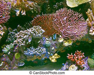 exótico, mar, colorido, coral, tropical, arrecife, peces