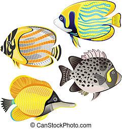 exótico, pez, conjunto