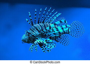 exótico, pez