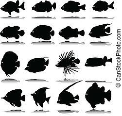 exótico, pez, vector, siluetas