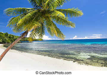 exótico, playa, palmera