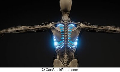 examen, humain, poumons, radiologie