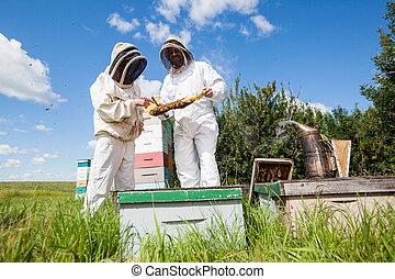 examinar, beekeepers, abejera, panal