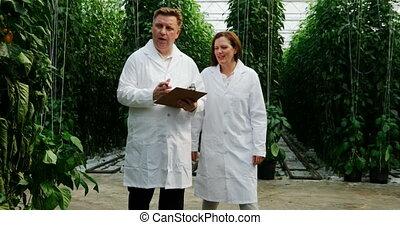examinar, científicos, plantas, invernadero, 4k