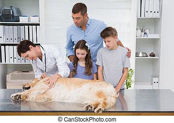 examinar, su, espantado, sonriente, veterinario, dueños, ...