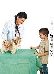 examine, mulher, veterinário, filhote cachorro