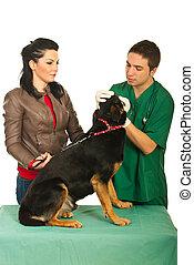 examine, veterinário, cão