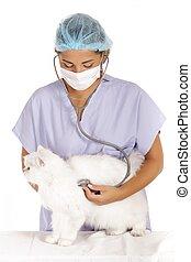 examiner, blanc, vétérinaire, chat
