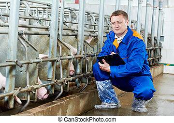 examiner, docteur, ferme, cochon, cochons, vétérinaire