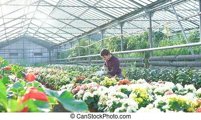 examiner, fleurs, 4k, gardenhouse, jardinier