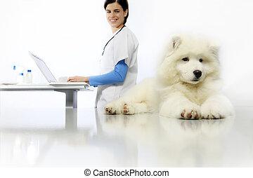 examiner, vétérinaire, chien, clinique, informatique, vétérinaire, table, sourire