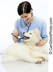 examiner, vétérinaire, chien, clinique, vétérinaire, table, sourire