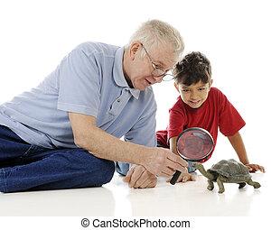 Examining the Turtle