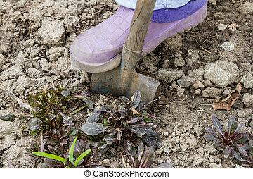 Excavation of plants in the garden