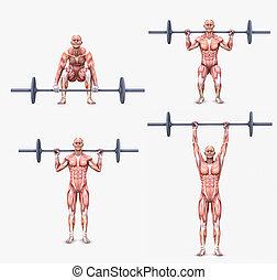 excercises, levantamiento de pesas