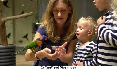 Excited children with mother feeding parrot bird sitting on hand. Gimbal motion
