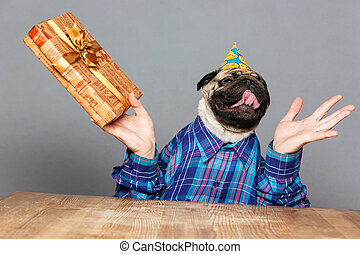 Excited happy pug dog with man hands holding gift
