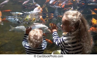 Excited sister and brother looking at colorful exotic fishes in aquarium. Children have fun at zoo. Gimbal motion shot