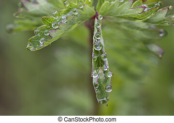 Exciting macro of dew drops on green flower